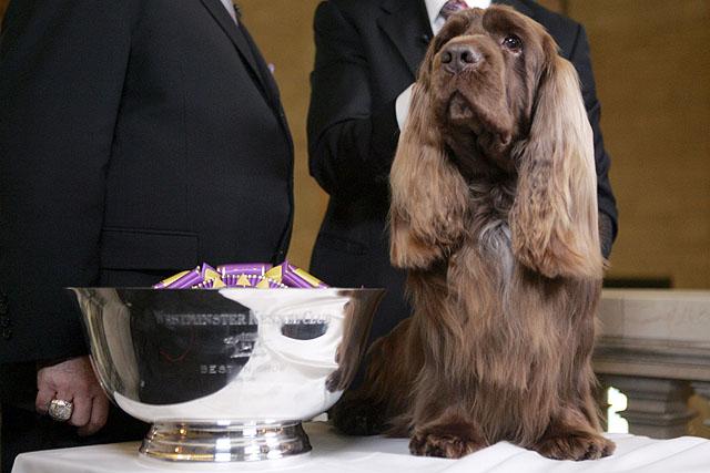 Westminster Dog Show Stump
