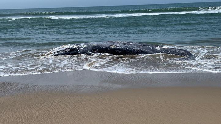 0523-whale