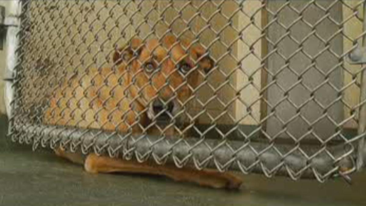 Nj Animal Shelter Owner Charged With Falsifying Dog