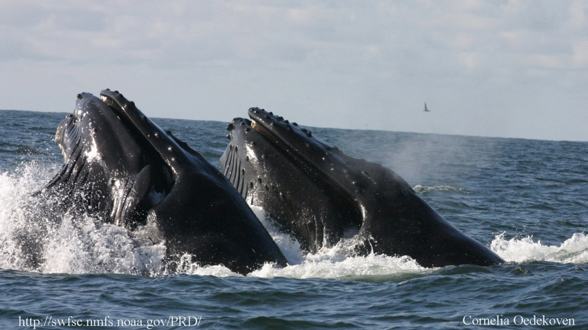 08-04-2014-new-whale