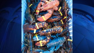 A fisherman in Maine caught three colorful lobsters in one day.