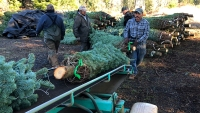 Crash Shines Light on Immigrants in Christmas Tree Workforce