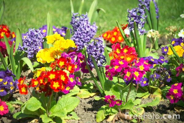 12_13_4---Flowers-in-a-Garden-Border_web