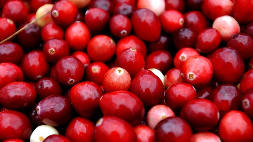 51526136DM009_cranberry