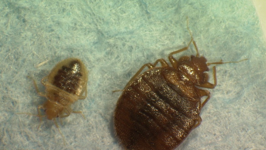 Theater Bedbugs