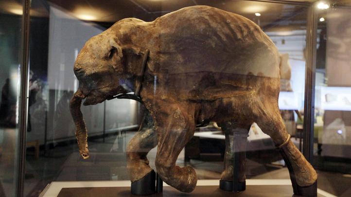 Mammoth Exhibit Chicago