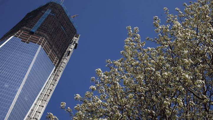 World Trade Center Survivor Tree