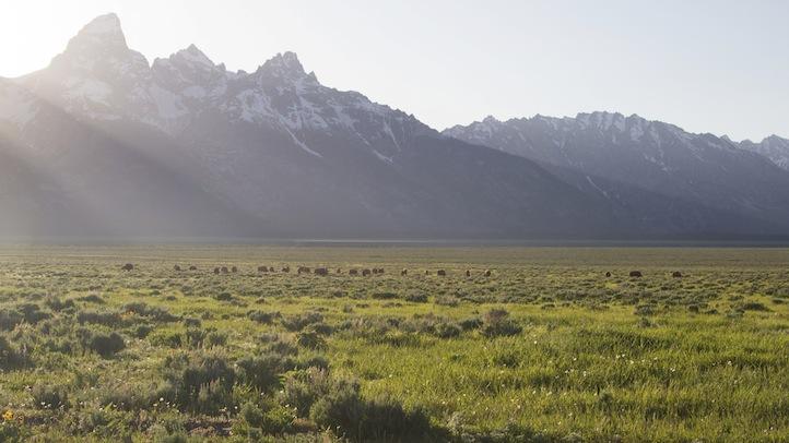 Grand Teton Land