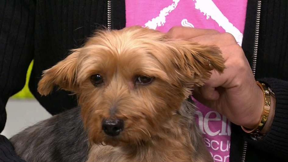 Adopt From Little Shelter Animal Rescue Today Nbc New York
