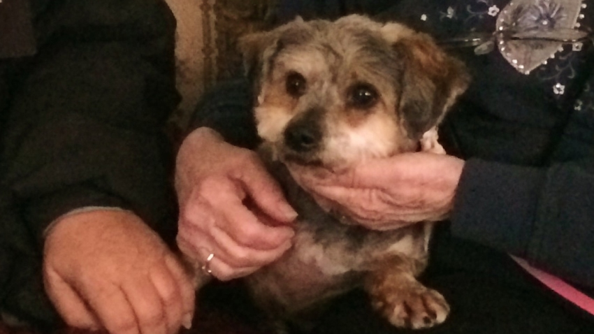 Annie the dog missing