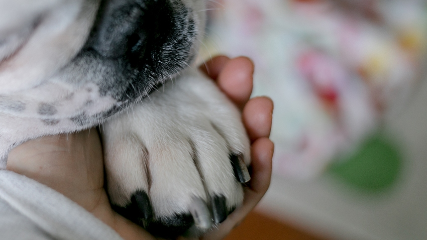 """A close-up of a dog paw """"holding hands"""" with a human companion"""