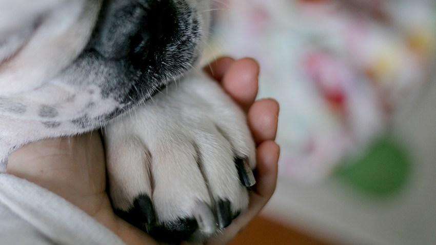 coronavirus dog to human