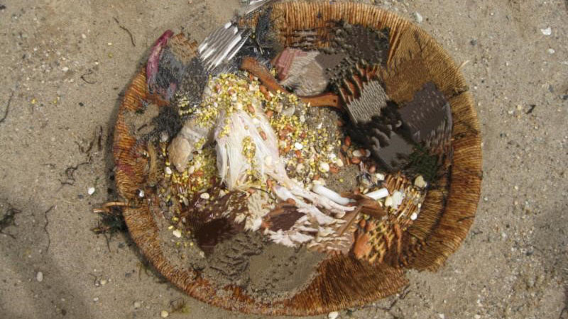 Decapitated Chickens 2