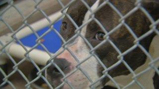 Dozens of Dogs Found Sick