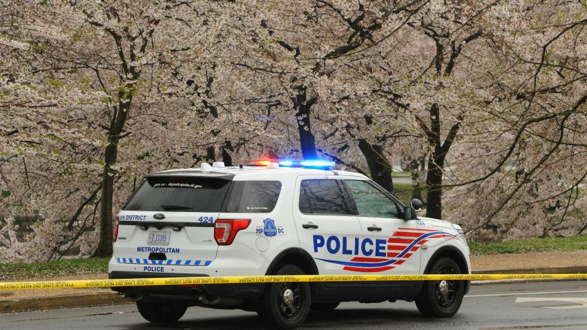 A police car stops beside blooming cherry trees