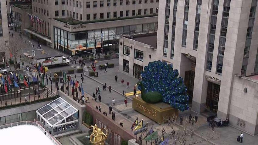Giant Peacock Pops Up In Rockefeller Plaza Nbc New York