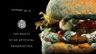 A moldy Burger King Whopper