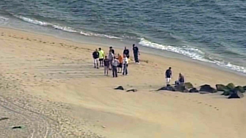Dead Whale Washes Up on Beach at Jersey Shore | Hamodia.com