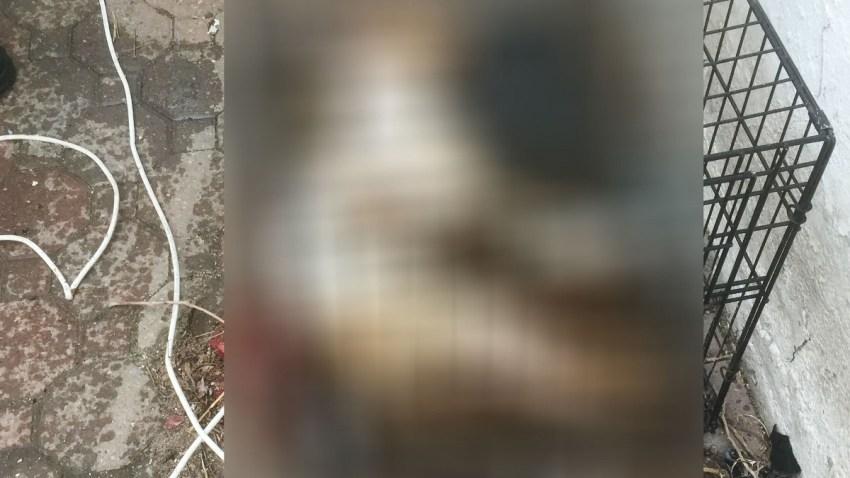 Mt Vernon dog again