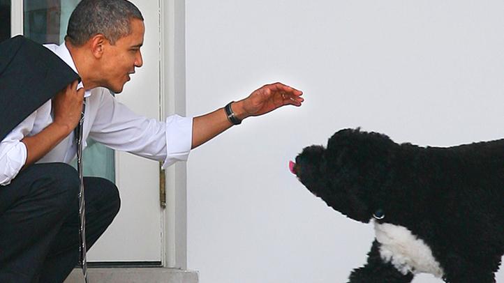 OBAMA AND DOG BO