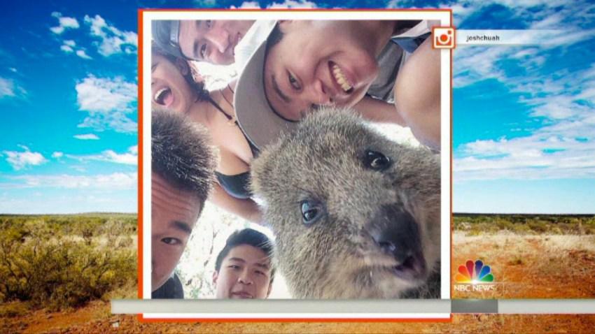 Quokka Selfie Today Show