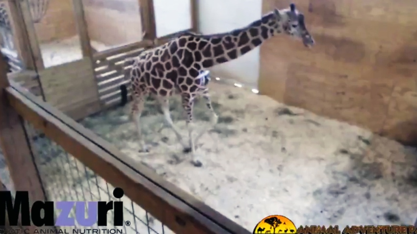april giraffe update