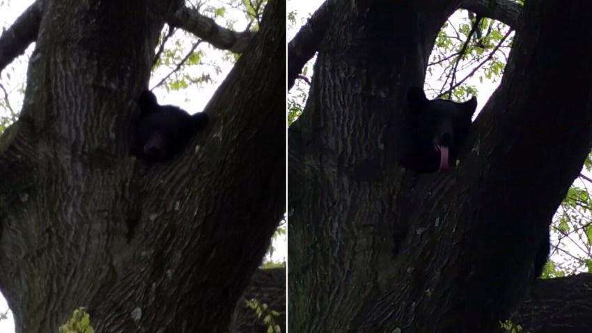 bear-tree-nj-0427