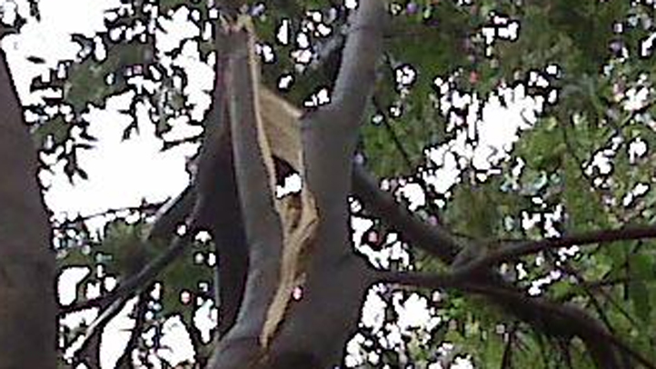damagedtree
