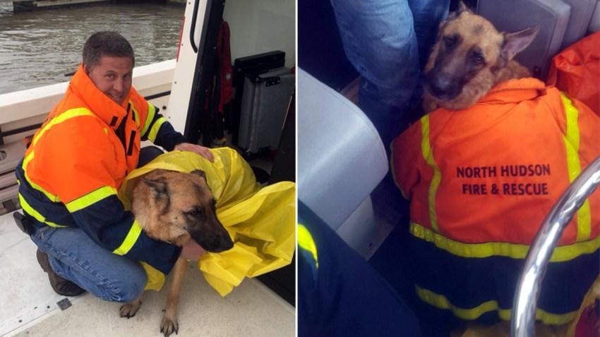 dog-rescue-hudson-river-0219b