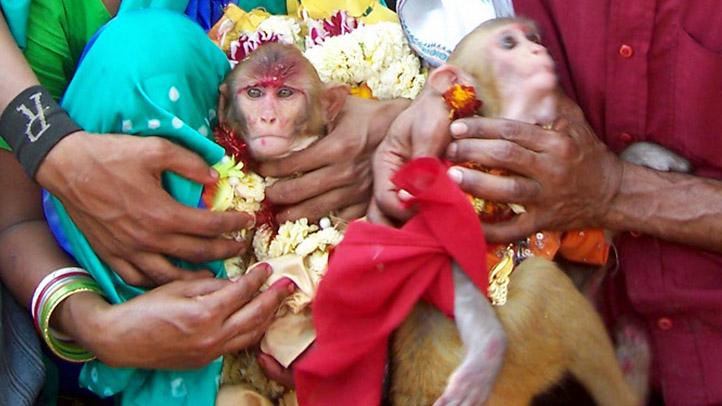 monkeywedding_2008