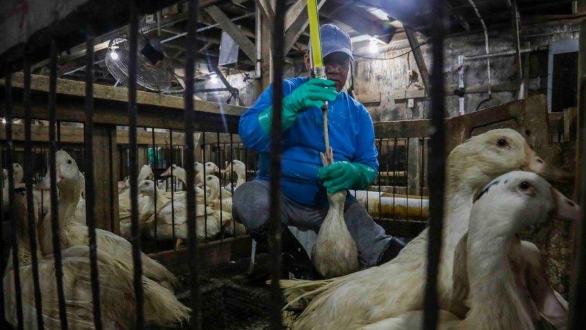CORRECTION Foie Gras Ban