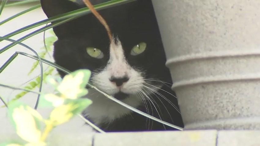 garfield cat problem resized