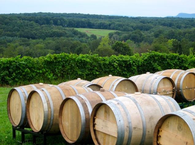 gouveia vineyards