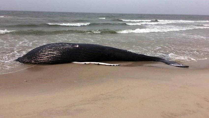 humpback-whale-5-5