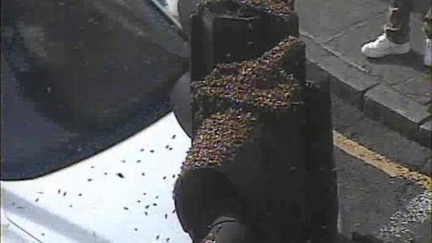 Britain London Insect Swarm