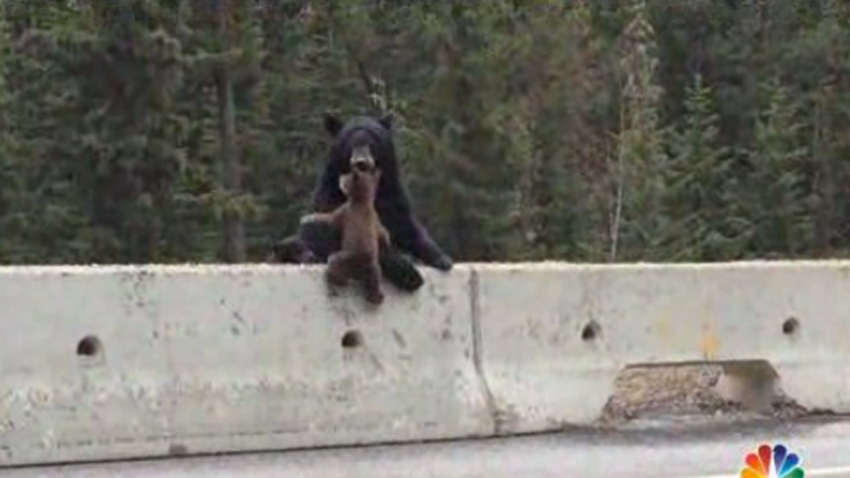 mama bear vid