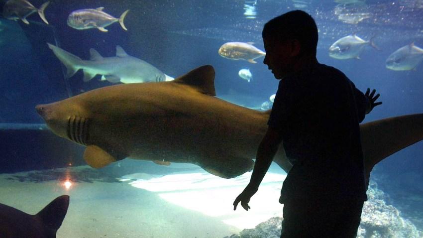 030909 New York Aquarium