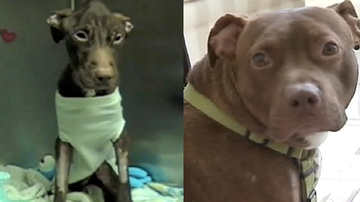 patrick the miracle dog before and after