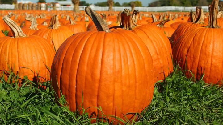 10-24-08 pumpkin patch Resized