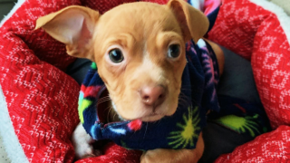 Puppy Thrown From Car