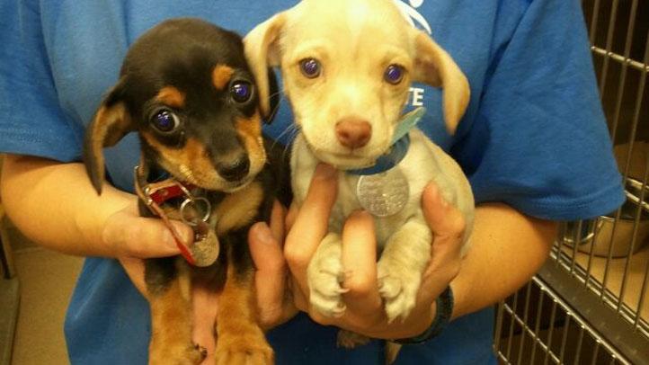 rescued AL pups