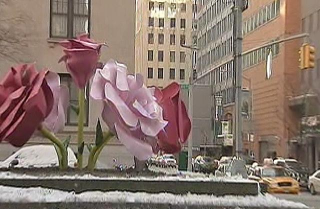 rosesparkave