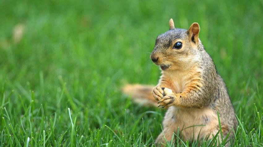 011109 Squirrel Generic