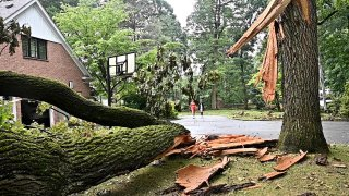 tree down near Long Island home