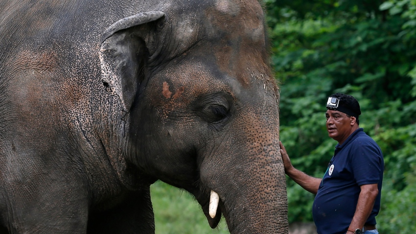 A veterinarian from the international animal welfare organization 'Four Paws' offers comfort to an elephant named 'Kaavan' during his examination at the Maragzar Zoo in Islamabad, Pakistan