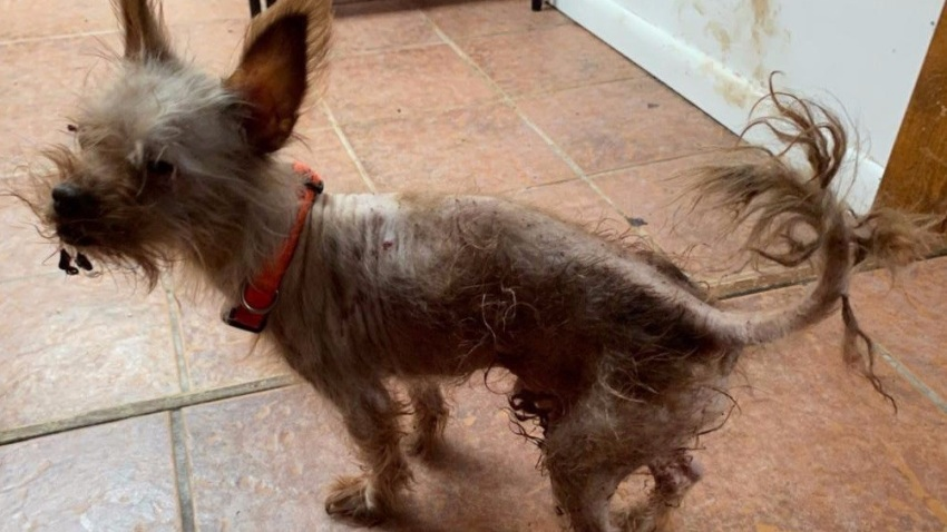 Neglected dog found inside Suffolk County home
