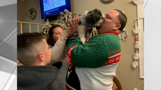 dog bella reunited with family