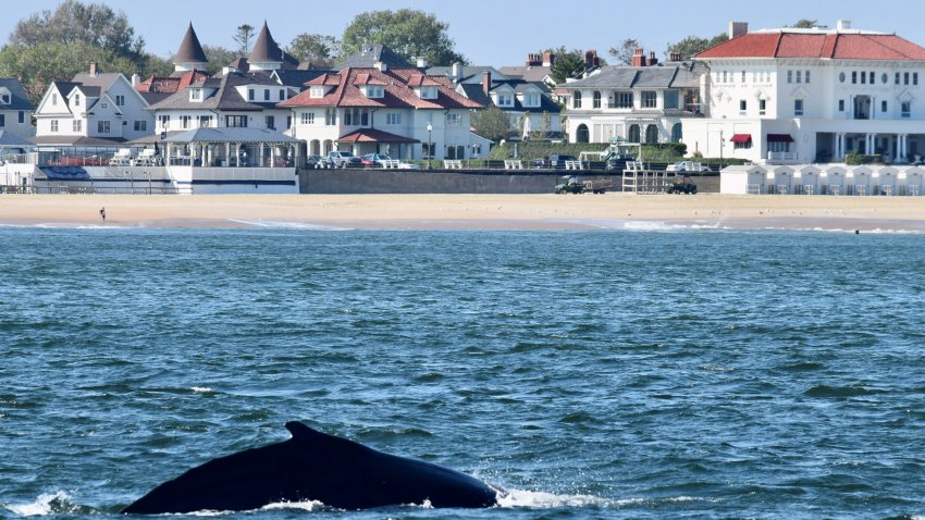 Whale off Jersey Shore