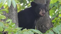 70-Pound Bear Cub Halts NJ Transit Train Traffic