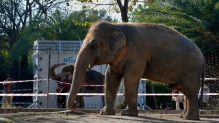 """A photographer takes a picture of an elephant named """"Kaavan"""" waiting to be transported to a sanctuary in Cambodia"""